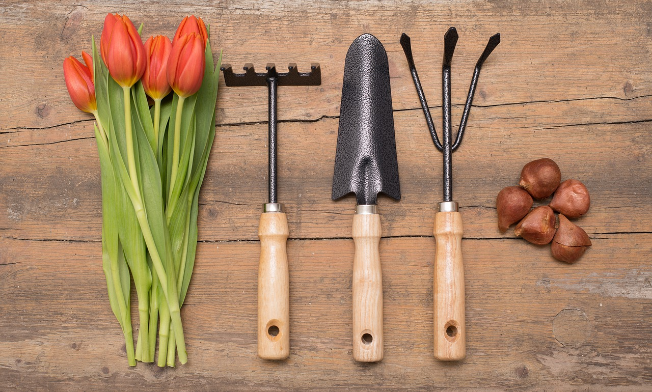 Holandské tulipány a jejich výsadba